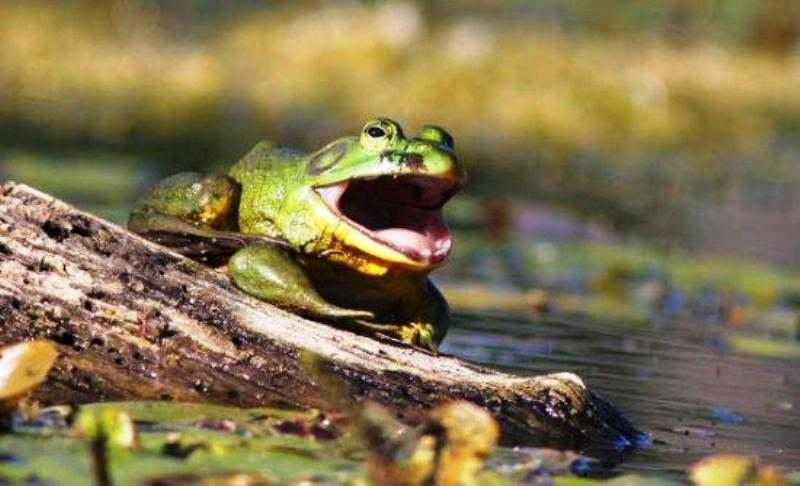 Σπάει η οικολογική αλυσίδα στην λίμνη Βιστωνίδα;