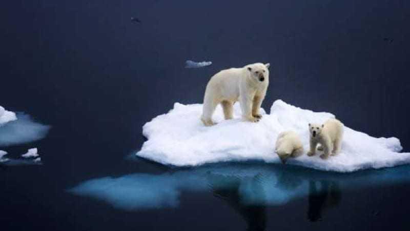 Η υπερθέρμανση του πλανήτη απειλεί το ένα έκτο των βιολογικών ειδών