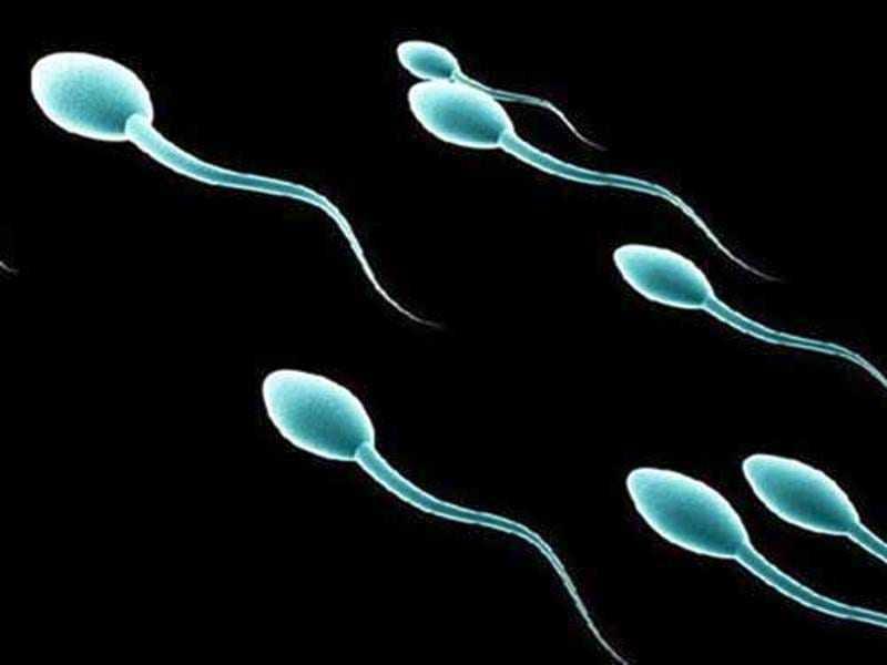 Ανθρώπινα σπερματοζωάρια στο εργαστήριο