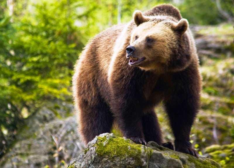 Καλλίτερα αρκούδες παρά βδέλλες που μας ρουφούν το αίμα