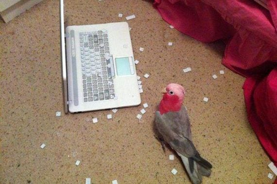 Πουλιά… παλιοχαρακτήρες