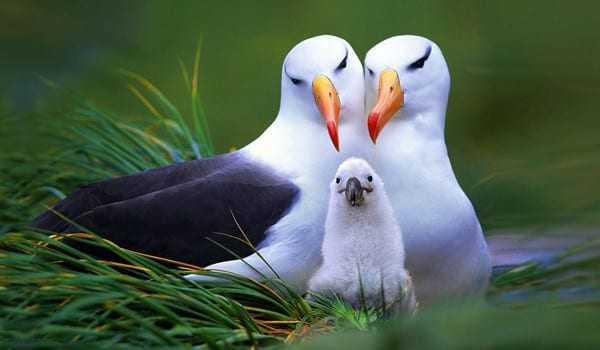 Ζώα που αγαπούν το ταίρι τους για πάντα!
