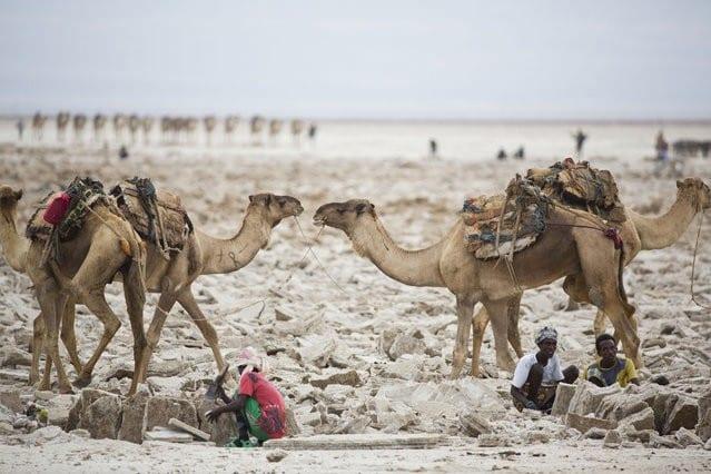 Εξόρυξη αλατιού με τα χέρια στην έρημο της Αιθιοπίας!