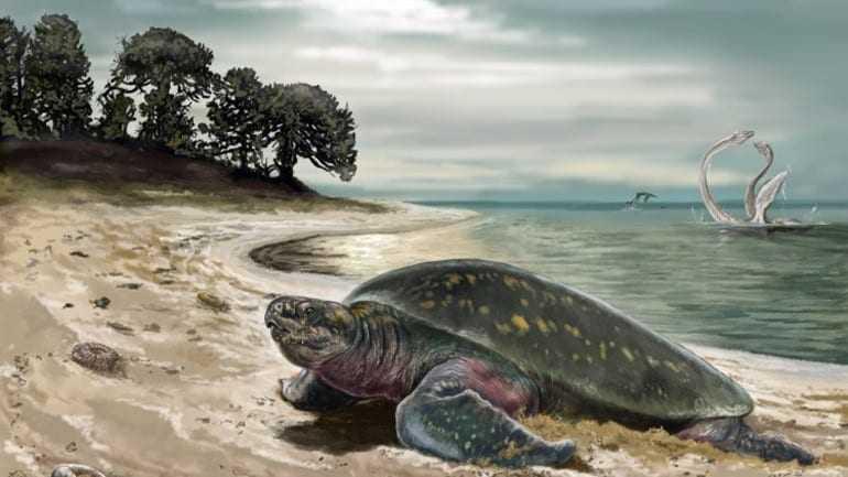 Ανακαλύφθηκε η αρχαιότερη θαλάσσια χελώνα ηλικίας 120 εκατ. ετών