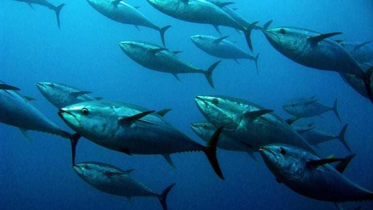 Ο πληθυσμός των θαλασσίων ειδών μειώθηκε κατά 50% από το 1970