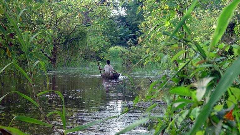 Η Νορβηγία επιβραβεύει τη Βραζιλία με ένα δισ. δολάρια για τη διατήρηση των δέντρων του Αμαζονίου
