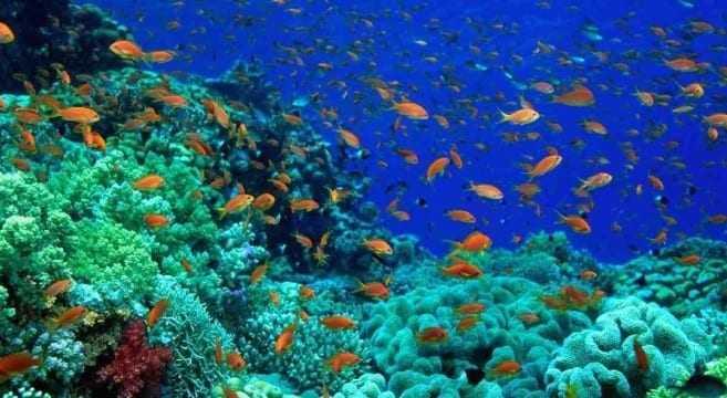 WWF: Το 50% της θαλάσσιας ζωής έχει εξαφανιστεί τα τελευταία 40 χρόνια