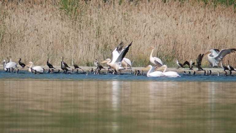 Δραματική μείωση των πουλιών στο Δέλτα του Έβρου
