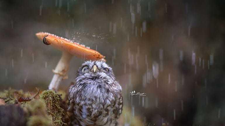 Όταν τα ζώα απολαμβάνουν το φθινόπωρο…