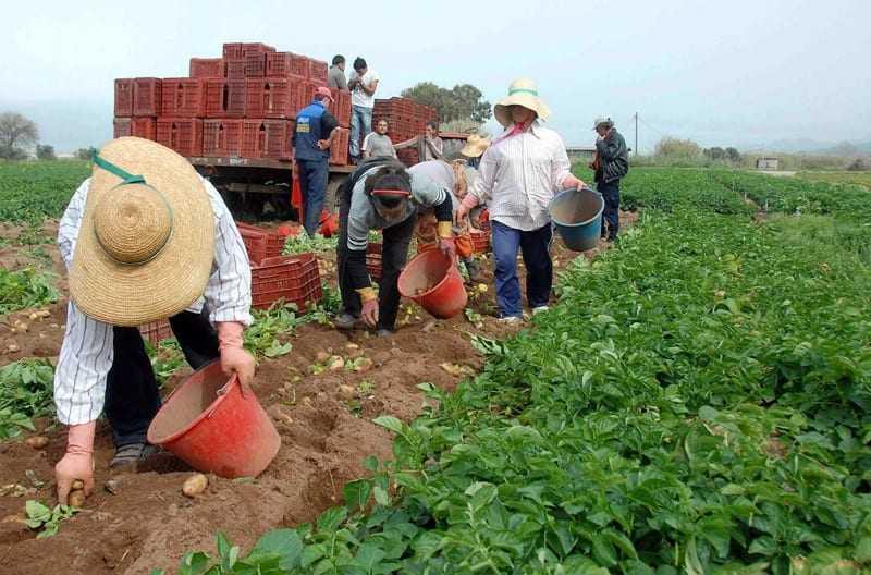 Επίκαιρη επερώτηση προς τον Υπουργό Αγροτικής Ανάπτυξης & Τροφίμων
