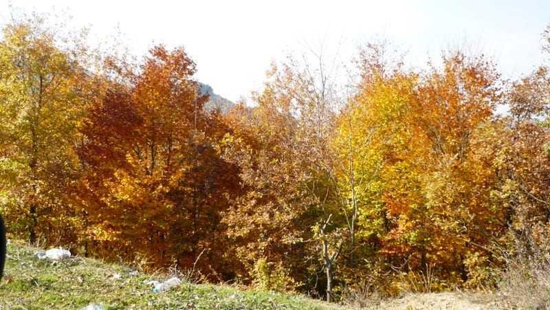 Ταξίδι στα χρώματα Φθινοπώρου από την Οροσειρά της Ροδόπης