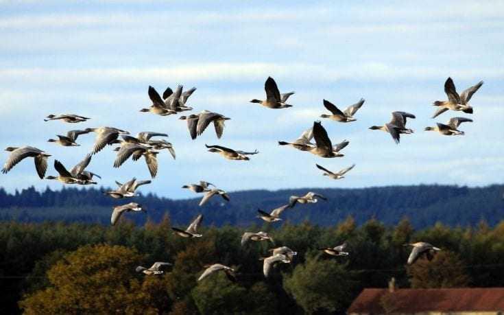 Πότε πέταξαν για πρώτη φορά τα σύγχρονα πουλιά