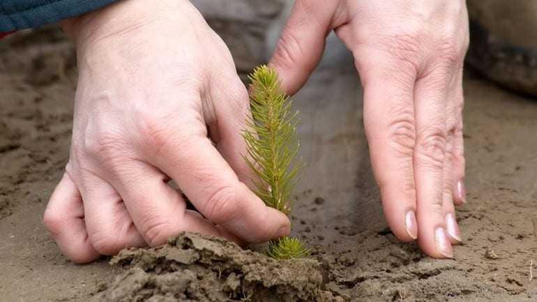 Θεσσαλονίκη: Περισσότερα από 4.000 δέντρα φυτεύτηκαν στην Ευκαρπία
