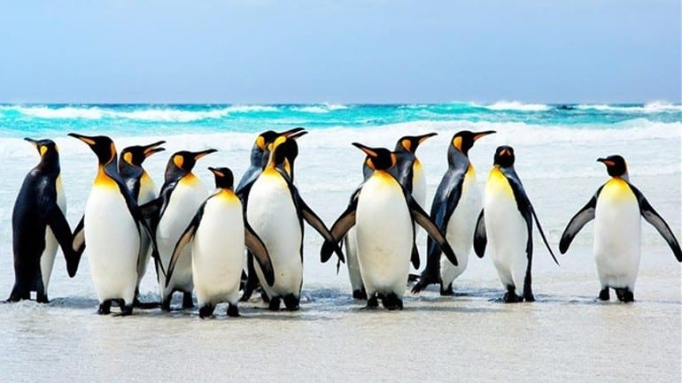 Νεκροί 150.000 πιγκουίνοι λόγω αποκλεισμού από παγόβουνο