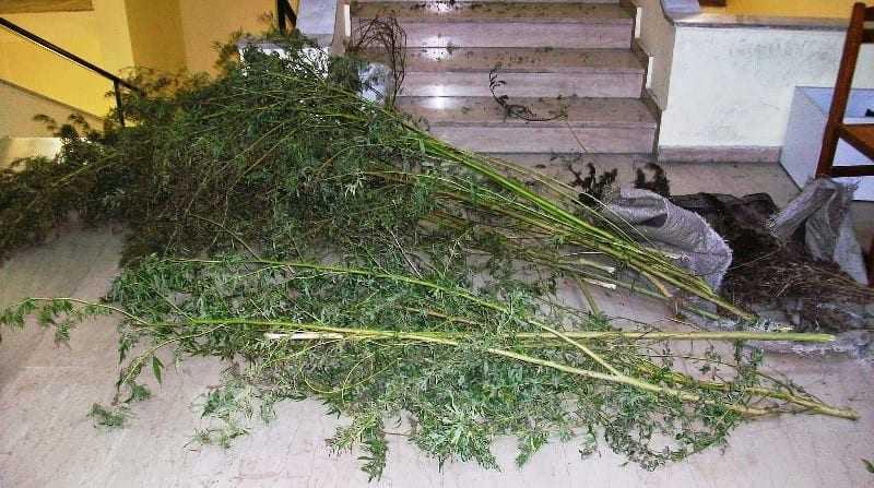 ύλληψη στην Ροδόπη  για καλλιέργεια φυτών κάνναβης,  κατοχή ναρκωτικών και λαθραίου καπνού