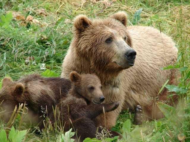 Ξύπνησαν οι αρκούδες στο Καταφύγιο του Αρκτούρου