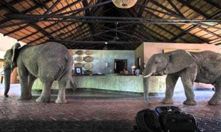 Ζάμπια: Ένας ελέφαντας στο δωμάτιο (του ξενοδοχείου) σου