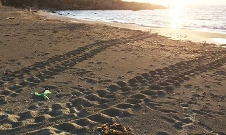 Τα πρώτα ίχνη θαλάσσιας χελώνας για το 2016 στην Κεφαλονιά