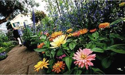 Ένα στα πέντε είδη φυτών στη Γη κινδυνεύει με εξαφάνιση
