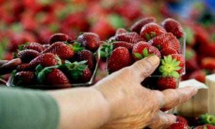 Δείτε πώς θα ξεχωρίζετε τα μεταλλαγμένα φρούτα και λαχανικά από τα φυσικά