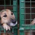 Η κακοποίηση ζώων συνδέεται με την κακοποίηση ανθρώπων