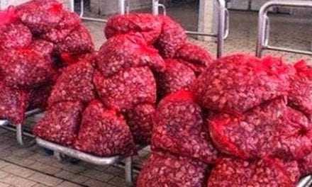 Κομοτηνή: 900 κιλά οστρακοειδή σε ΙΧ, ακατάλληλα για βρώση