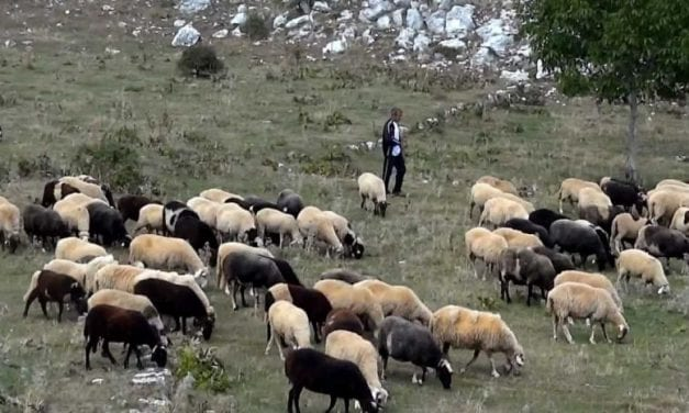 ΞΑΝΘΗ. Σε αδιέξοδο οι οργισμένοι κτηνοτρόφοι