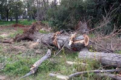 Ακόμη ένας νέος νεκρός Ξανθιώτης από πτώση δένδρου.