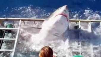 Τι κάνεις αν κλειστής σε κλουβί με καρχαρία;