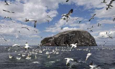 Τα θαλασσοπούλια τρώνε τα πλαστικά επειδή τους μυρίζουν σαν τροφή