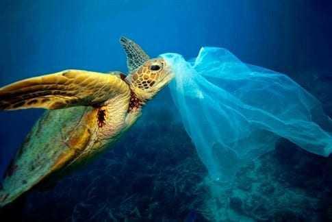Βρετανία: Οι ακτές καθάρισαν μετά την επιβολή χρέωσης στην πλαστική σακούλα