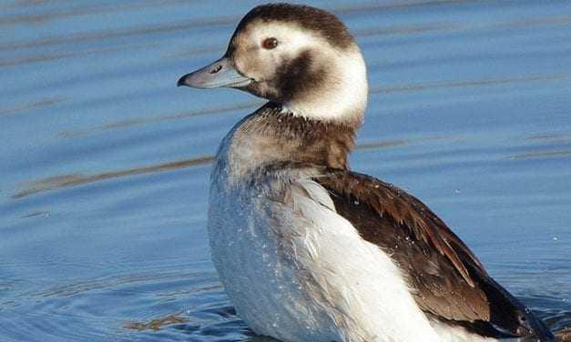 Σπάνια πουλιά βρήκαν καταφύγιο στο Δέλτα Αξιού