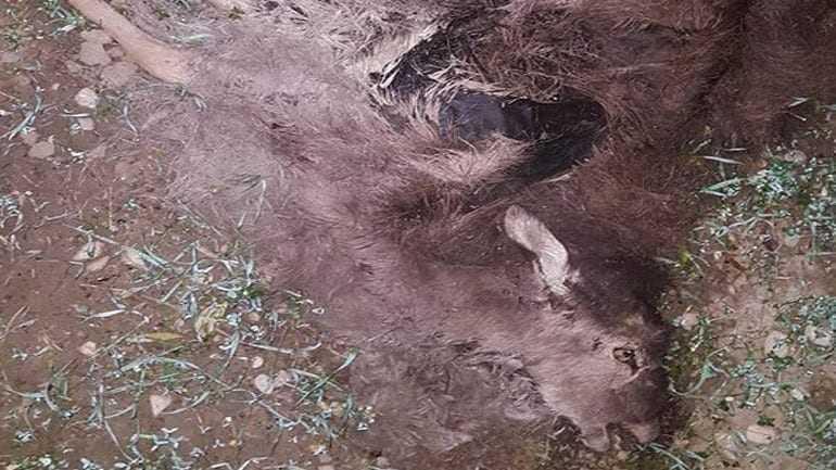 Άγνωστοι σκότωσαν 14 ελάφια στη Ρόδο – σε εξέλιξη έρευνες της αστυνομίας και της θηροφυλακής