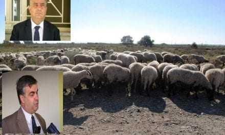 «Άστεγα» τα πρόβατα στην Συδινή; Καθ οδό ο Αντιπεριφερειάρχης