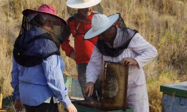Μεγάλες απώλειες στα μελίσσια του Έβρου εξαιτίας παρατεταμένης ξηρασίας και παγωνιάς