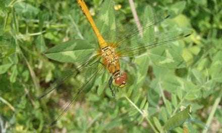 «Ο μικρόκοσμος του Εθνικού Πάρκου Ανατολικής Μακεδονίας και Θράκης: Τα έντομα». Ημερίδα στο 1ο Δημπτικο Σχολείο Ξάνθης