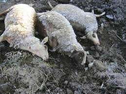 Πρόγραμμα Διαχείρισης των Νεκρών Ζώων στην Περιφέρεια ΑΜΘ