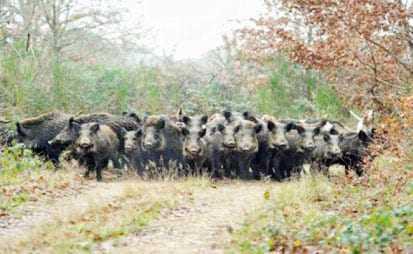 Μπέρδεψαν τα αγριογούρουνα του Δήμου Τοπείρου με τον εξωδικαστικό μηχανισμό στον ΣΥΡΙΖΑ Ξάνθης.