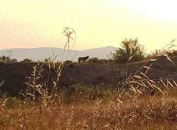 Λύκοι στην Ξάνθη. Οι κυνηγοί εφιστούν την προσοχή των πολιτών