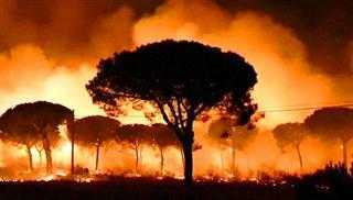 Καίγεται η νότια Ισπανία – Εκατοντάδες εγκαταλείπουν τα σπίτια τους