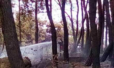 Αυτη είναι η ζημιά στο πανέμορφο δάσος των Αρχαίων Αβδήρων