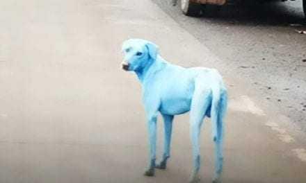 """Μετά τα """"πράσινα άλογα"""", τώρα μπλε σκύλοι"""