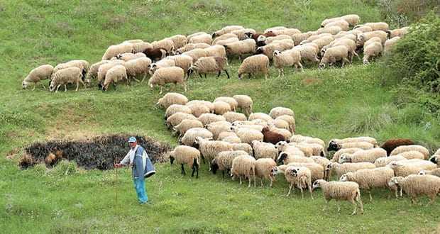Βιοσημότητα κτηνοτροφίας στην Θράκη – Ερώτηση Χ.Α.