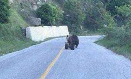 Ξάνθη: Πήγε άτα … η αρκούδα το αρκουδάκι