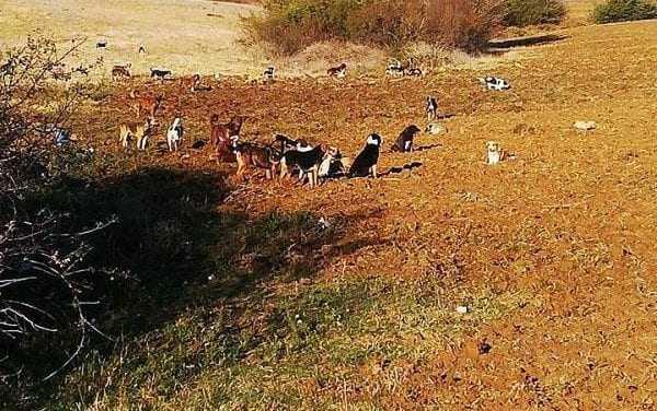 Αγέλες σκύλων παραμονεύουν δυο βήματα από την Ξάνθη