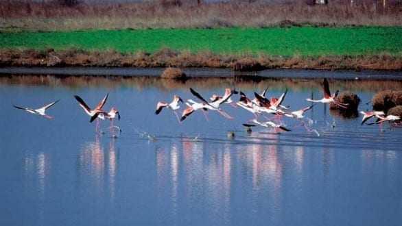 Συγκρότηση συμβουλευτικού οργάνου διαχείρισης προορισμού για την τουριστική προβολή της Περιφέρειας ΑΜΘ
