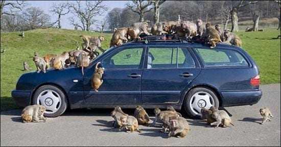 ΔΡΑΜΑ: Κυκλοφορούσε με «μαϊμού» αυτοκίνητο