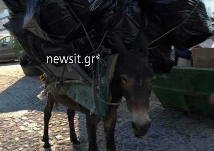 Έγκλημα χωρίς τιμωρία στη Σαντορίνη – Κραυγή αγωνίας για τα γαϊδουράκια