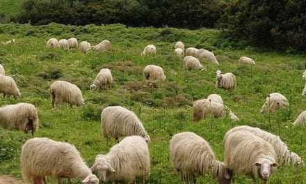 Σε επιφυλακή η κτηνοτρόφοι της Ξάνθης
