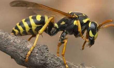Νεκρός από τσίμπημα σφήκας 59χρονος στα Γρεβενά